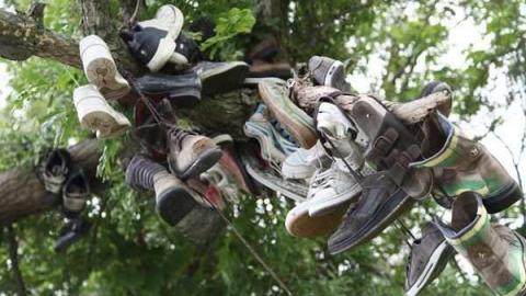 The Great Shoe Tree cover photo