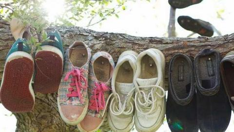 Shoe Tree cover photo