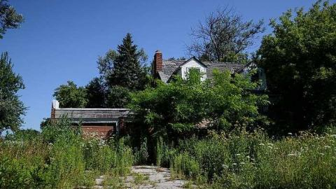 Excessive Overgrowth cover photo