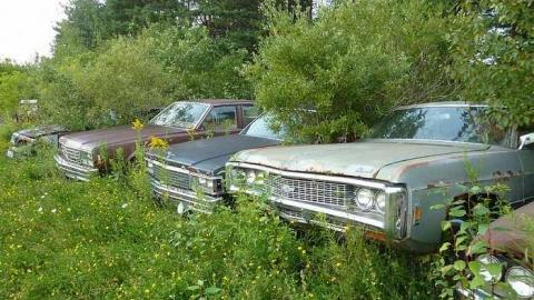Classic cars in the bush cover photo