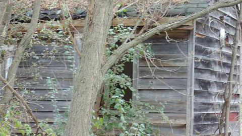 Abandoned Cabin in the Trees cover photo