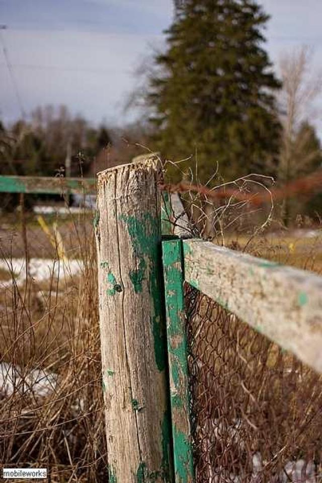 Old Dundee - Beckers-Abandoned-Cemetery13.jpg