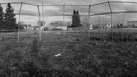 Field Of Dreams cover photo