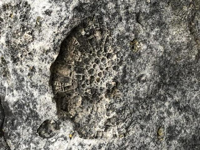 Stone Road Fossils/Crystals - Stone-Rd-Prison-Quarry4.jpeg