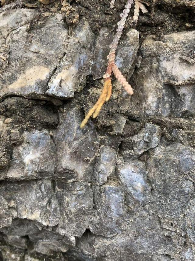 Stone Road Fossils/Crystals - Stone-Rd-Prison-Quarry23.jpeg