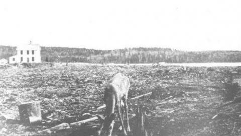 Mowat (Tom Thomson murder) cover photo