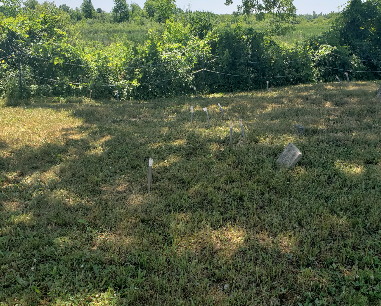Smith/Cross Cemetery - July 4 2020 - 12.png