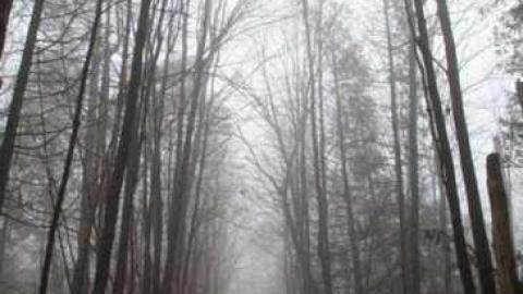 Foggy '12 visit cover photo