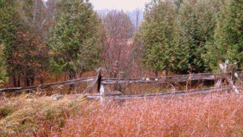 Herron Mills Ghost Town cover photo
