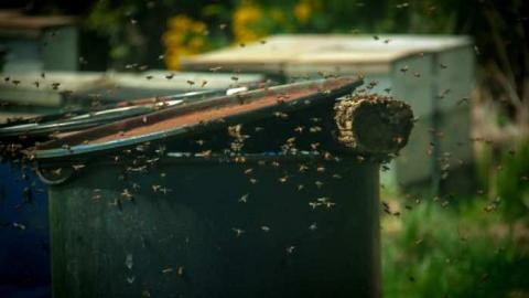 Bees !! cover photo